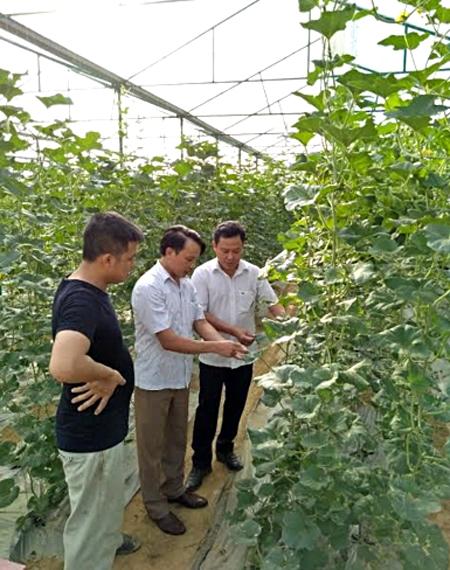 Lãnh đạo Liên minh Hợp tác xã tỉnh tham quan mô hình trồng dưa trong nhà lưới của Hợp tác xã Q&C huyện Văn Yên.