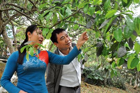 Mỗi năm người dân xã Đại Minh thu về từ 50 - 60 tỷ đồng từ trồng bưởi. (Trong ảnh: Nông dân xã Đại Minh trao đổi kinh nghiệm thụ phấn cho bưởi).