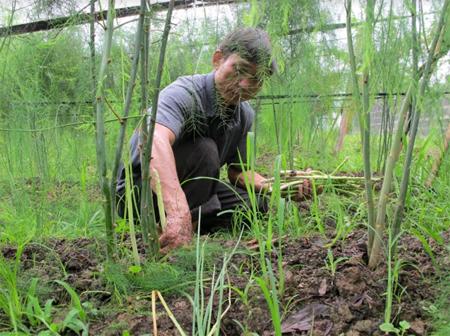 Măng tây - cây trồng mới ở Nghĩa An góp phần phát triển kinh tế hộ trong xây dựng nông thôn mới.