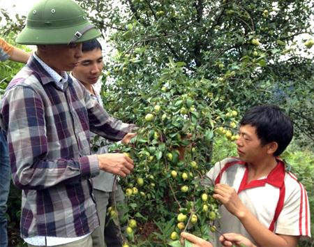 Cán bộ Ban Quản lý rừng phòng hộ huyện Trạm Tấu trao đổi với người dân về hiệu quả của cây sơn tra trong phát triển kinh tế tại địa phương.
