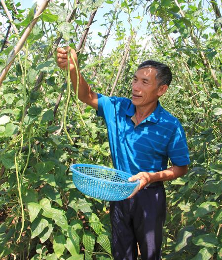 Cựu chiến binh Nguyễn Hải Âu hàng ngày vẫn hăng say lao động.