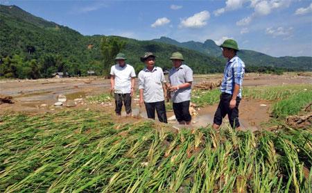 Giám đốc Sở Nông nghiệp và Phát triển Nông thôn Trần Thế Hùng (thứ hai bên phải) kiểm tra, chỉ đạo khôi phục sản xuất tại xã Sơn Lương, huyện Văn Chấn.