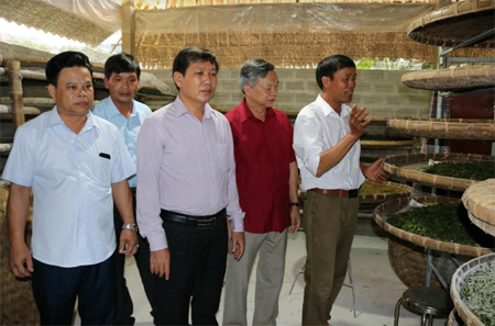 Đồng chí Nông Văn Lịnh - Ủy viên Ban Thường vụ Tỉnh ủy, Chủ tịch Ủy ban MTTQ tỉnh (thứ hai bên phải) tham quan mô hình trồng dâu nuôi tằm tại xã nông thôn mới Tân Đồng, huyện Trấn Yên.