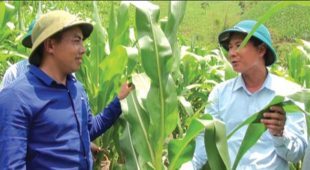 Anh Vàng A Rua (trái) trao đổi kinh nghiệm trồng  ngô với cán bộ khuyến nông.