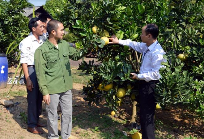 Nhiều hộ nghèo xã Yên Thái đã vươn lên thoát nghèo nhờ vay vốn ngân hàng trồng cây ăn quả.