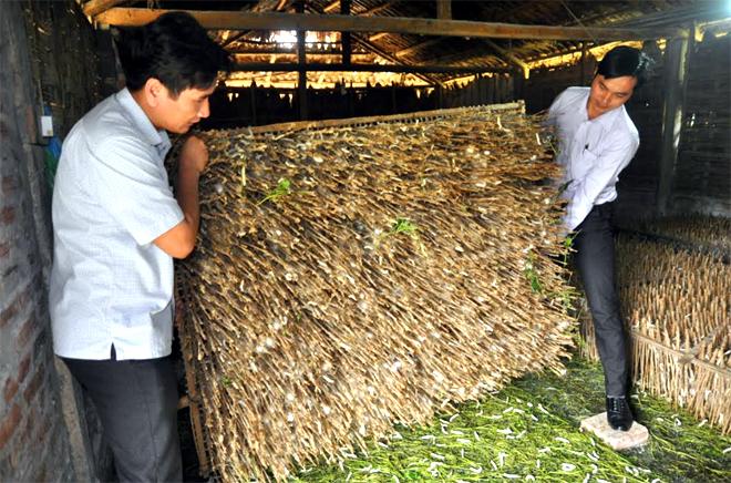 Trồng dâu nuôi tằm mang lại thu nhập cao và ổn định cho người dân xã Việt Thành, huyện Trấn Yên.
