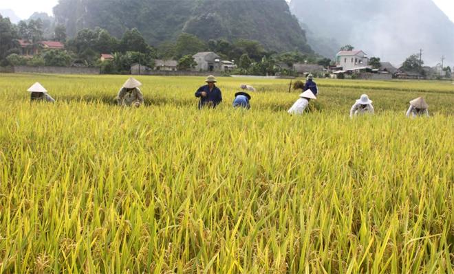 Trong 6 tháng đầu năm, giá trị sản xuất ngành nông nghiệp đạt 2.598 tỷ đồng.