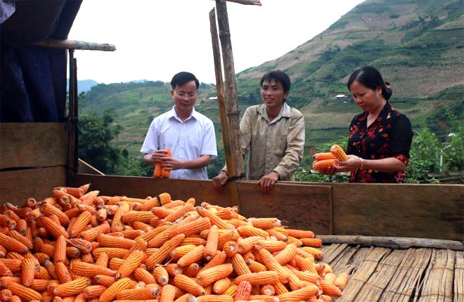 Lãnh đạo huyện Trạm Tấu trao đổi với người dân xã Tà Xi Láng về hiệu quả sản xuất ngô hàng hóa.