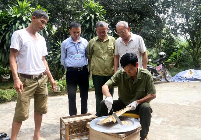 Các thành viên trong Tổ hợp tác Nuôi ong mật xã Minh Bảo, thành phố Yên Bái trao đổi kỹ thuật khai thác mật ong.