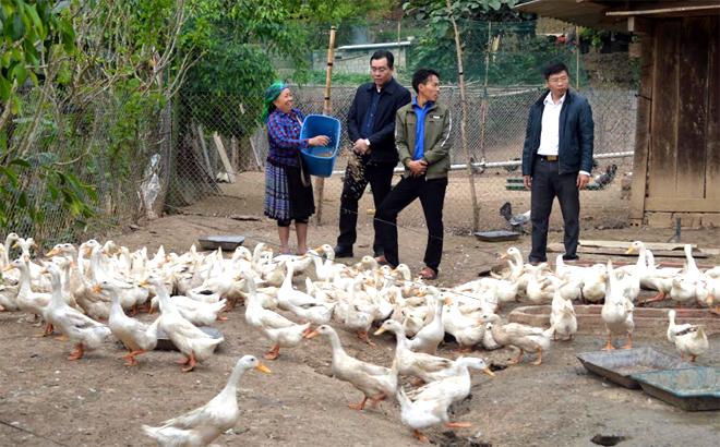 Lãnh đạo huyện Mù Cang Chải thăm mô hình nuôi vịt đẻ trứng ở xã Lao Chải.