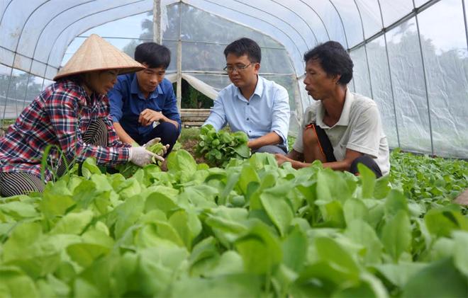 Lãnh đạo và cán bộ nông nghiệp xã Âu Lâu kiểm tra sản xuất rau an toàn tại thôn Đầm Vông.