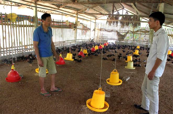 Mô hình nuôi gà bán công nghiệp của gia đình anh Bùi Đức Lợi ở thôn Tân Việt mang lại hiệu quả kinh tế cao.