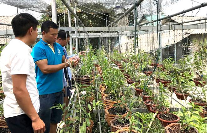 Mô hình trồng hoa lan của anh Lò Văn Dũng cho thu nhập cao.