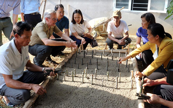 The provincial Vietnam Farmers' Union coordinates with experts from the FFF Programme to popularize the ardisia silvestris farming techniques to farmers in Dao Thinh commune, Tran Yen district.