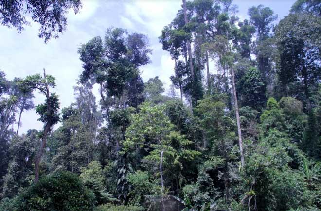Bảo vệ tốt rừng đầu nguồn là góp phần đắc lực bảo vệ môi trường sống (Ảnh minh họa)