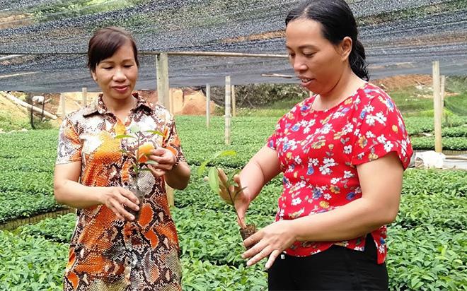 Chị Phạm Thị Dịu (bên phải) chia sẻ kinh nghiệm chăm sóc cây quế giống với chị em hội viên.