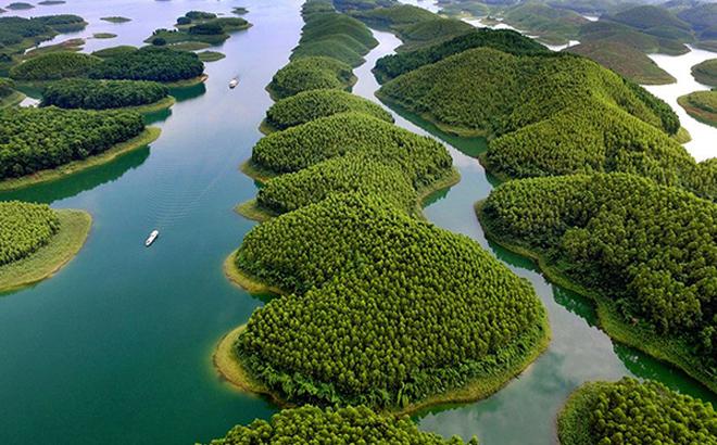 Những hòn đảo lớn nhỏ trên hồ Thác Bà phủ kín màu xanh của những rừng cây kinh tế.