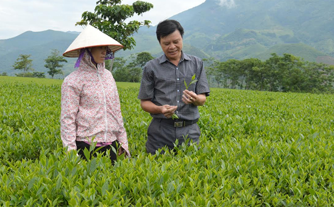 Staff of the Lien Son farm township discuss tea harvesting techniques with local farmers.