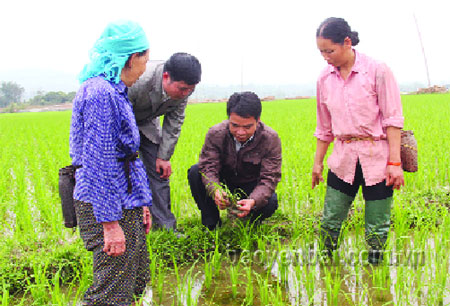 Cán bộ Phòng Nông nghiệp - Phát triển nông thôn cùng bà con các dân tộc xã Sơn A kiểm tra quá trình sinh trưởng phát triển của cây lúa.