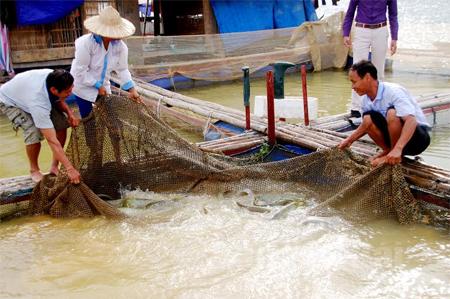 Mô hình nuôi cá lồng của gia đình anh Nguyễn Văn Đông ở thôn Trung Sơn, xã Mông Sơn mỗi năm cho thu nhập 120 triệu đồng.