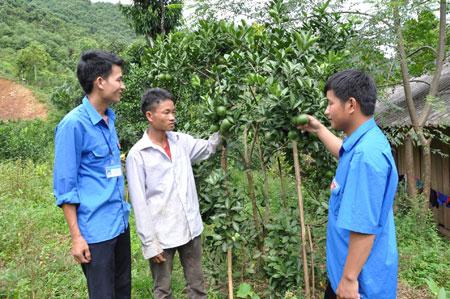 Mô hình trồng cây ăn quả của anh Sổng A Cở (đứng giữa) mang lại hiệu quả kinh tế cao.