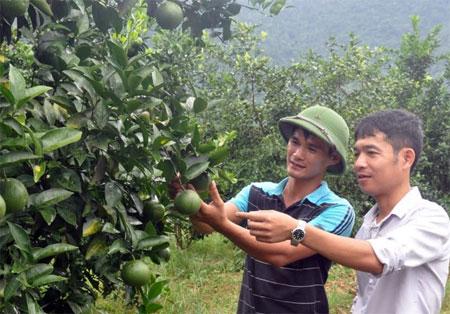 Nhiều gia đình ở xã Thượng Bằng La có thu nhập cao nhờ trồng cây ăn quả.