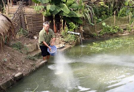 Ông Vi Văn Đạt chăm sóc ao cá.