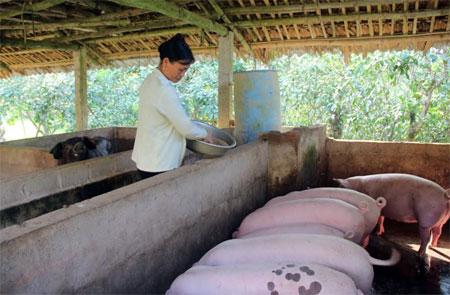 Chị Trịnh Kim Cúc, thôn Quyết Tiến, xã Đại Minh phát huy hiệu quả vốn vay từ nguồn quỹ tiết kiệm trong phát triển kinh tế gia đình.