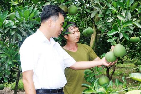 Lãnh đạo xã Bạch Hà thăm vườn bưởi của gia đình anh Lương Văn Tám.