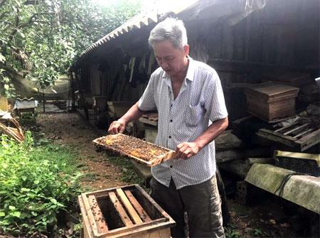 Ông Nguyễn Văn Tuyên kiểm tra chất lượng đàn ong.