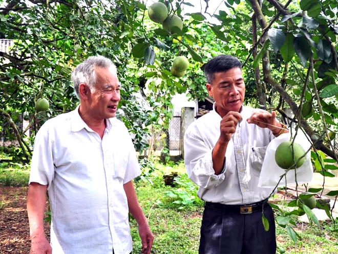 Ông Phạm Văn Hùng (bên phải) giới thiệu vườn bưởi của gia đình áp dụng một số tiêu chuẩn kỹ thuật mới.