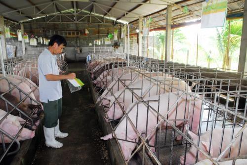 Bộ Nông nghiệp khuyến cáo nên đẩy mạnh chăn nuôi an toàn sinh học