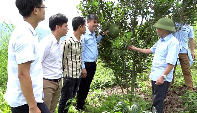 Lãnh đạo huyện Văn Chấn kiểm tra mô hình trồng mắc ca của nhân dân xã Gia Hội.