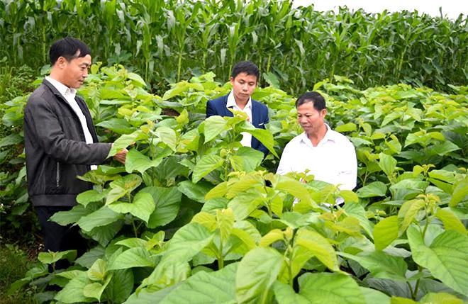 Lãnh đạo xã Xuân Ái kiểm tra mô hình trồng dâu nuôi tằm tại thôn Quyết Hùng.