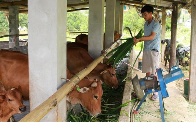 70% hộ gia đình trên địa bàn huyện Văn Chấn đã xây dựng chuồng trại đảm bảo vệ sinh môi trường.