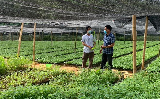Mô hình tổ hợp tác ươm và kinh doanh cây giống thuộc Hợp tác xã Dịch vụ tổng hợp nông nghiệp xã Tân Thịnh mang lại hiệu quả cao.