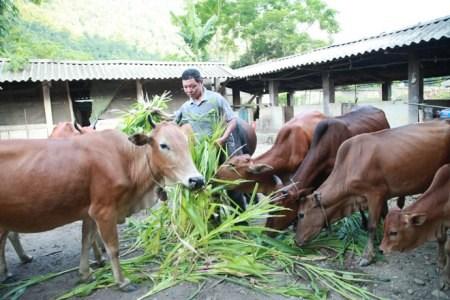Nhiều mô hình sản xuất, chăn nuôi được địa phương áp dụng.