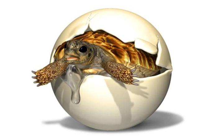 Hoá thạch trứng rùa được phát hiện có từ kỷ Phấn trắng.