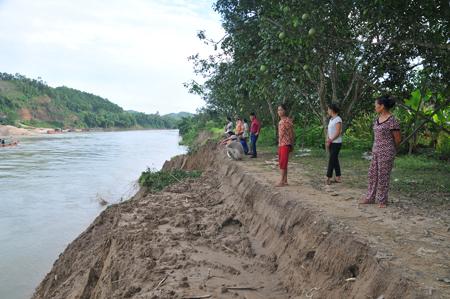 Vườn bưởi của gia đình anh Nguyễn Ngọc Khiêm bị thiệt hại do sạt lở.