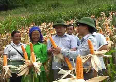 Lãnh đạo huyện Trạm Tấu vận động người dân gieo trồng ngô đồi thay lúa nương tại xã Bản Mù.