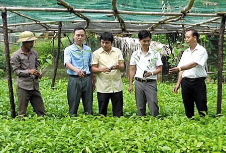 Cán bộ luân chuyển về xã An Lương vận động nhân dân phát triển quế.