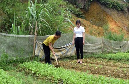 """Mô hình """"Vườn rau gia đình"""" của Chi hội Phụ nữ thôn Khe Ca đã có 100% gia đình hội viên thực hiện hiệu quả."""