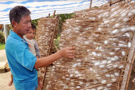 Nhờ trồng dâu, nuôi tằm mỗi năm người dân xã Việt Thành thu về trên 15 tỷ đồng.