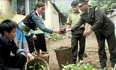 Cán bộ kiểm lâm huyện Văn Chấn giao cây giống phục vụ trồng rừng vụ thu cho người dân.