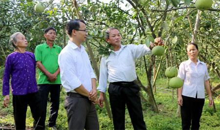 Xã Đại Minh đang rà soát để lựa chọn 18 hộ gia đình tham gia xây dựng mô hình vườn kiểu mẫu. (Trong ảnh: Mô hình trên 200 gốc bưởi của gia đình ông Nguyễn Quang Xuân ở thôn Đồng Nếp).