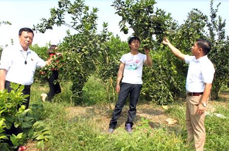 Mô hình trồng cam của gia đình anh Nguyễn Ngọc Tú, thôn Cao 2 (đứng giữa) cho hiệu quả kinh tế cao.