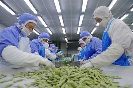 Công nhân phân loại đậu tương để đóng gói xuất khẩu ở một nhà máy thuộc tỉnh An Huy, Trung Quốc.