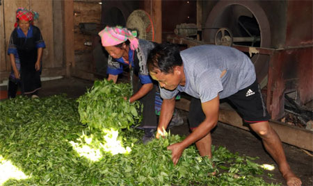 Một góc xưởng sao chè của gia đình bà Xủng Thị Vang.