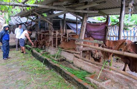 Nhân dân Yên Bái tích cực tăng gia, sản xuất, phát triển kinh tế gia đình (ảnh minh họa).