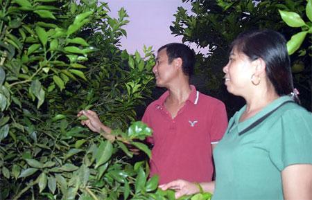 Bà Nguyễn Thị Nguyệt - Bí thư Chi bộ thôn Yên Bình thăm một gia đình trồng cây ăn quả cho thu nhập cao